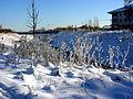Winter an der Körne.jpg