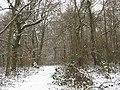 Winter in Elmstead Woods (6) - geograph.org.uk - 1655689.jpg