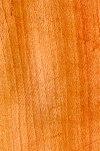 Wood platanus.jpg