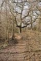 Woodland path - geograph.org.uk - 1757119.jpg