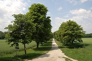 Burg Wiener Neustadt - Academy Park