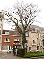 Zottegem Heldenlaan Vredesboom (4) - 191116 - onroerenderfgoed.jpg