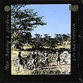 """Men Hoeing a Garden"", Livingstonia, Malawi, ca.1910 (imp-cswc-GB-237-CSWC47-LS4-1-053).jpg"