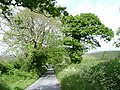 """Oak before ash"", Greenway Lane - geograph.org.uk - 1327248.jpg"