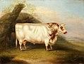 'Harlsonia' (Shorthorn Bull) by Henry Stafford.jpg