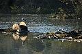 ¿Les importan realmente nuestros ríos? (4029590461).jpg
