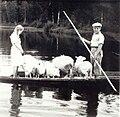 Öykstock i Lappfjärds å, cirka 1950..jpg