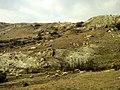 Ак Кая - Белая скала, отара овец на склонах.jpg