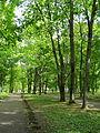 Алея в парку садиби Кочубея.jpg