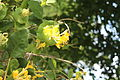 Ботанічний сад цвіте.JPG