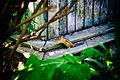 Бурундук ботанического сада 09.jpg