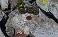 Геодезический знак на хр. Яворник - panoramio (1).jpg