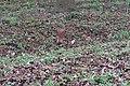 """Дендрологический парк """"Подолье"""". Фото 6.jpg"""