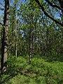 Дендрологічний парк, Довгинцівський район 23.JPG