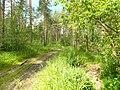 "Дорога ""Русь-Селиваниха"" 2013 - panoramio (11).jpg"