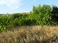 Заброшенный дачный посёлок - panoramio (64).jpg