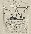 Картинка к статье «Мины заграждения». Фигура 7. Военная энциклопедия Сытина (Санкт-Петербург, 1911-1915).jpg
