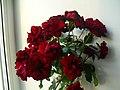 Красивые розы.jpg