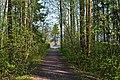 Ладожский мемориальный лесопарк.jpg
