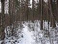Лес и знакомая тропинка со следами - panoramio.jpg