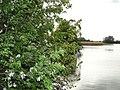 На берегу Лаптевского пруда цветут дикие яблони - panoramio.jpg