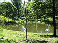 Озеро или пруд.JPG