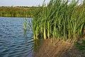 Озеро - panoramio (349).jpg