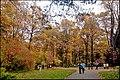 Осень в Ботаническом саду - panoramio (1).jpg