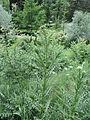 Парк шума Гази Баба во мај (90).JPG