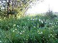 """Парк шума """"Гази Баба"""" 72.jpg"""