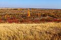 Пойма реки Илек осенью - panoramio.jpg
