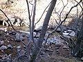 "Резерват ""Стара река"" 28.jpg"