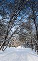 София през зимата (Sofia in winter) - panoramio (3).jpg