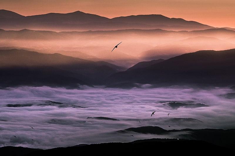 File:Сутрин на Безбог... Бързолети по изгрев слънце.jpg