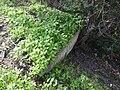 גבעת העמדות ברכס נשר ההיסטורי - בונקר מגורים בתחתית הגבעה (3).jpg
