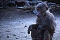 مجموعه عکس از رفتار میمون ها در باغ وحش تفلیس- گرجستان 02.jpg