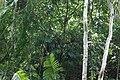 খাদিমনগর জাতীয় উদ্যান 03.jpg