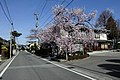 平福寺2 - panoramio.jpg