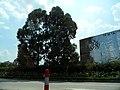 广东省江门市街道景色 - panoramio (4).jpg