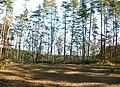 木材置場跡 - panoramio.jpg