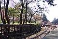 櫻花鐵道 Sakura Railway - panoramio.jpg