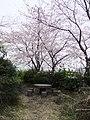 沼川公園の桜 - panoramio.jpg