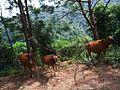 紫金南岭镇20121001 - panoramio (4).jpg