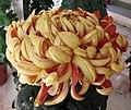 菊花-金剛虎閣 Chrysanthemum morifolium 'Warrior Guardian Tiger Chamber' -香港圓玄學院 Hong Kong Yuen Yuen Institute- (12085270253).jpg