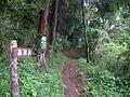 高取山・分岐点 - panoramio.jpg
