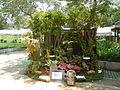 05557jfMidyear Philippines Orchid Exhibits Quezon Cityfvf 26.JPG
