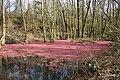 0 Harchies - Chemin des Maillettes – Petit marais (1).JPG