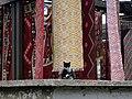 18 Skopje, the emperor cat (33752600946).jpg