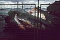 1977.07,08- 8 -42,43aS Sperm whale,whaling Albany,Western Australia,AU sat23-tue26jul1977.jpg