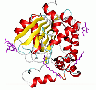 Palmitoyl protein thioesterase - Palmitoyl protein thioesterase 1. Red plane shows hydrocarbon boundary of the lipid bilayer